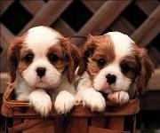 Vademecum per l' acquisto di un cane