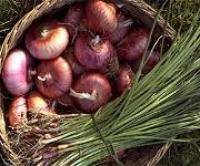 Effetti benefici cipolla, aglio e porro