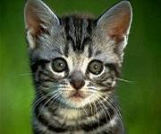 Vademecum per l'acquisto di un gatto